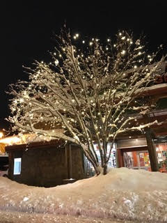 img - tree in steamboat