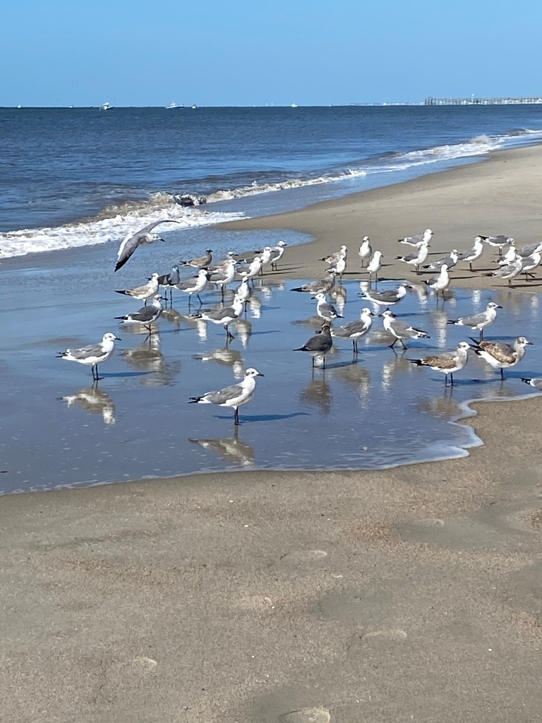 Walks on the beach centered my soul.